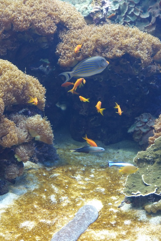 Lisbon Aquarium (2) Almontes Abroad