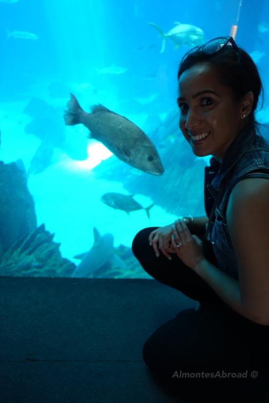Lisbon Aquarium (4) Almontes Abroad